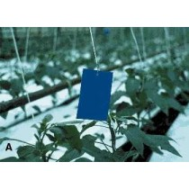 BLUE STICKY CARD TRAPS – RETAIL                           GPM105